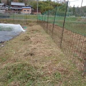 種まきしたエンドウと第三菜園の獣害対策強化準備を始めました
