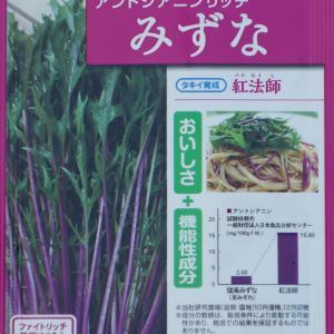 水菜の種蒔き1回目【9/25】