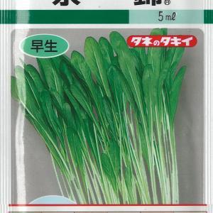 壬生菜の種蒔き【9/25】