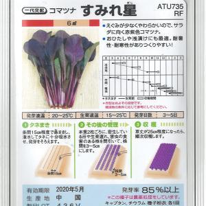 サラダ小松菜の種蒔き