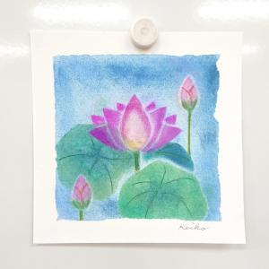 今月は蓮の花