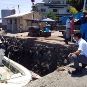 クラゲ漁と諫早湾干拓