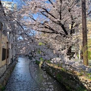 春いっぱいの木屋町と鴨川