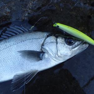 釣り納めと釣り初めの釣行記