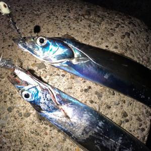 秋の岸壁太刀魚