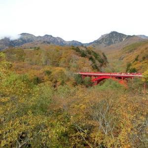 赤い橋 紅葉の様子