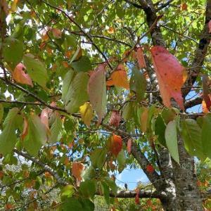 すっかり秋の陽気