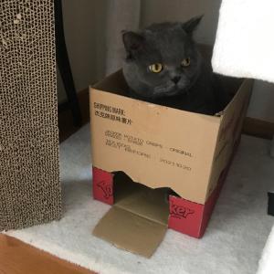 猫ホイホイ。