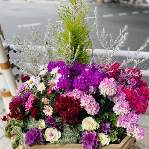 きれいなお花たち♡