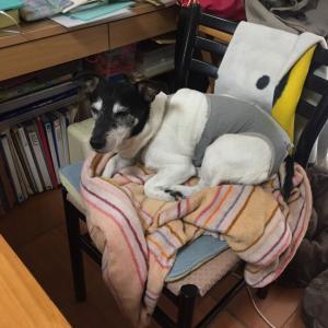 犬に占領されない椅子