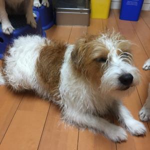 サロン並みの重労働 多頭飼いの犬洗い