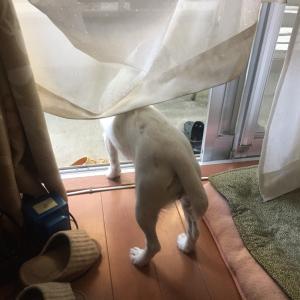 緊急警報発令する警護犬