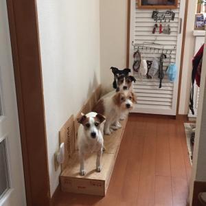 違いがわかる犬のテレワークの朝