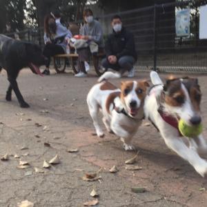 イヌ同士の遊び