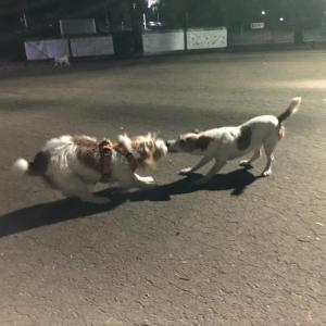 飼い主と犬は似たもの同士かも