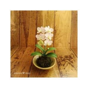 ミニ胡蝶蘭、日本タンポポ、スノードロップ出品してます。