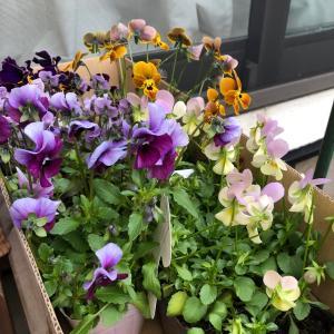 財布のひもが緩むのはお花を買うとき &オママショップ追加情報