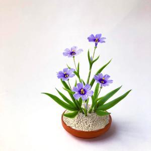 青花ニワゼキショウ(シシリンチウム)と続・庭の花
