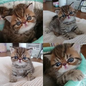 子猫ちゃんのオーナー様募集中です。