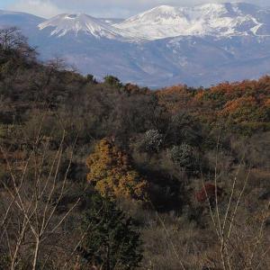 2019年11月21日の花見山公園