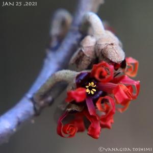 2021年1月25日の花見山公園