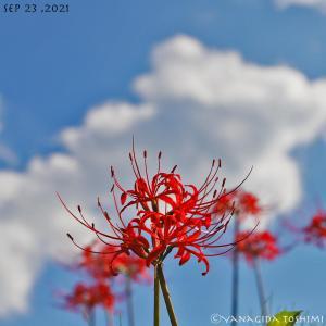 2021年9月23日の花見山公園