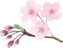町内の桜がようやく開花しました。