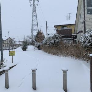 多賀城積雪8センチ