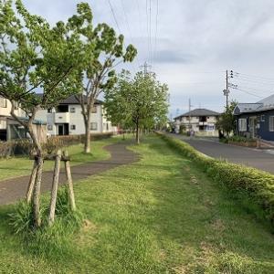 町内の緑道が新緑で綺麗です。