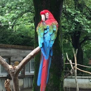 千葉市動物公園のインコたち☆「エール」だれが合格する?