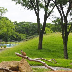 千葉市動物公園ZOO散歩「ミーヤキャット編」最近の幸せって?