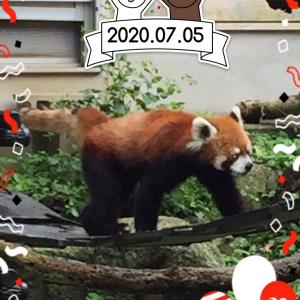 千葉市動物公園「風太君17歳の誕生日」ライオンと子供たち