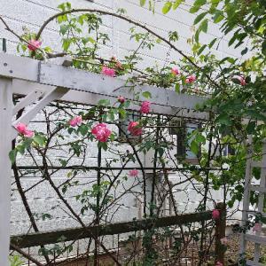 http://maribara.blog.fc2.com/blog-entry-1591.html