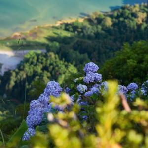 生物多様性とは何か?~環境の日に考える。