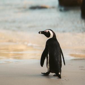 生物多様性を守るため、世界自然保護会議がマルセイユで開かれた。