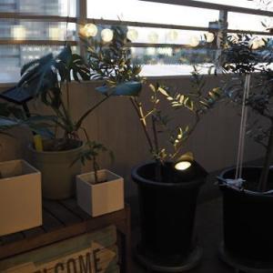 IKEAとニトリの屋外照明で熱帯夜の中にもホッとする場所を。