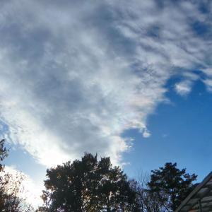 彩雲と甲斐犬親子