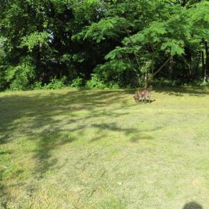 庭の草刈りと犬と猫
