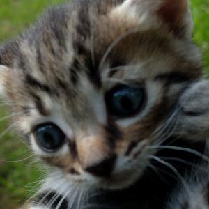 子猫を捨てないで!