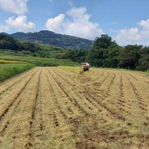 稲刈り ⑤