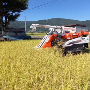 稲刈り⑦⑧