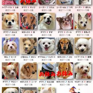 第70回里親会参加犬&欠席犬のお知らせ