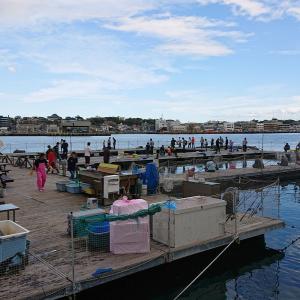 城ヶ島海上イケス釣堀 J'sフィッシングで海釣りを楽しむ