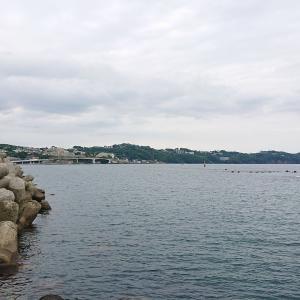 湯河原海浜公園で海釣りを楽しむ カゴカキダイ・シマアジ・メジナ・オヤビッチャが釣れた
