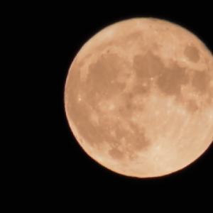 今宵は中秋の名月