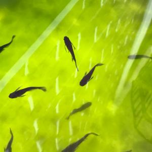青水と魚のコントラスト