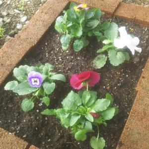花壇に花を。。。
