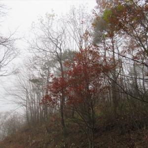 濃霧の山散歩