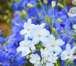 【マイクロスコープの斉藤光学です】デルフィニウムの花びらを観察しました。