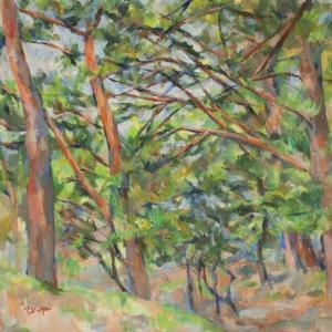 赤松の林(3)
